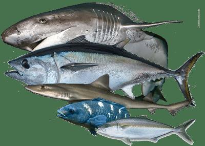 Offshore Fishing Charter