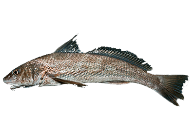 Whiting Fishing Charter